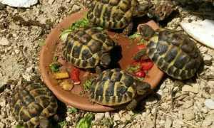 5344 | Petites tortues -
