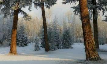 5143 | Forêt enneigée -